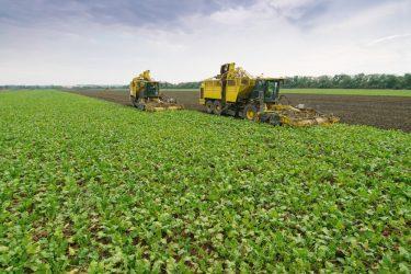 suikerbiet oogst