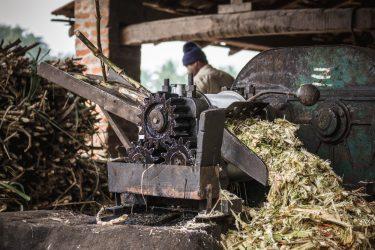 suikerriet snippers