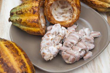 Cacao pulp