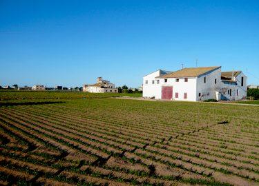 chufa boerderij